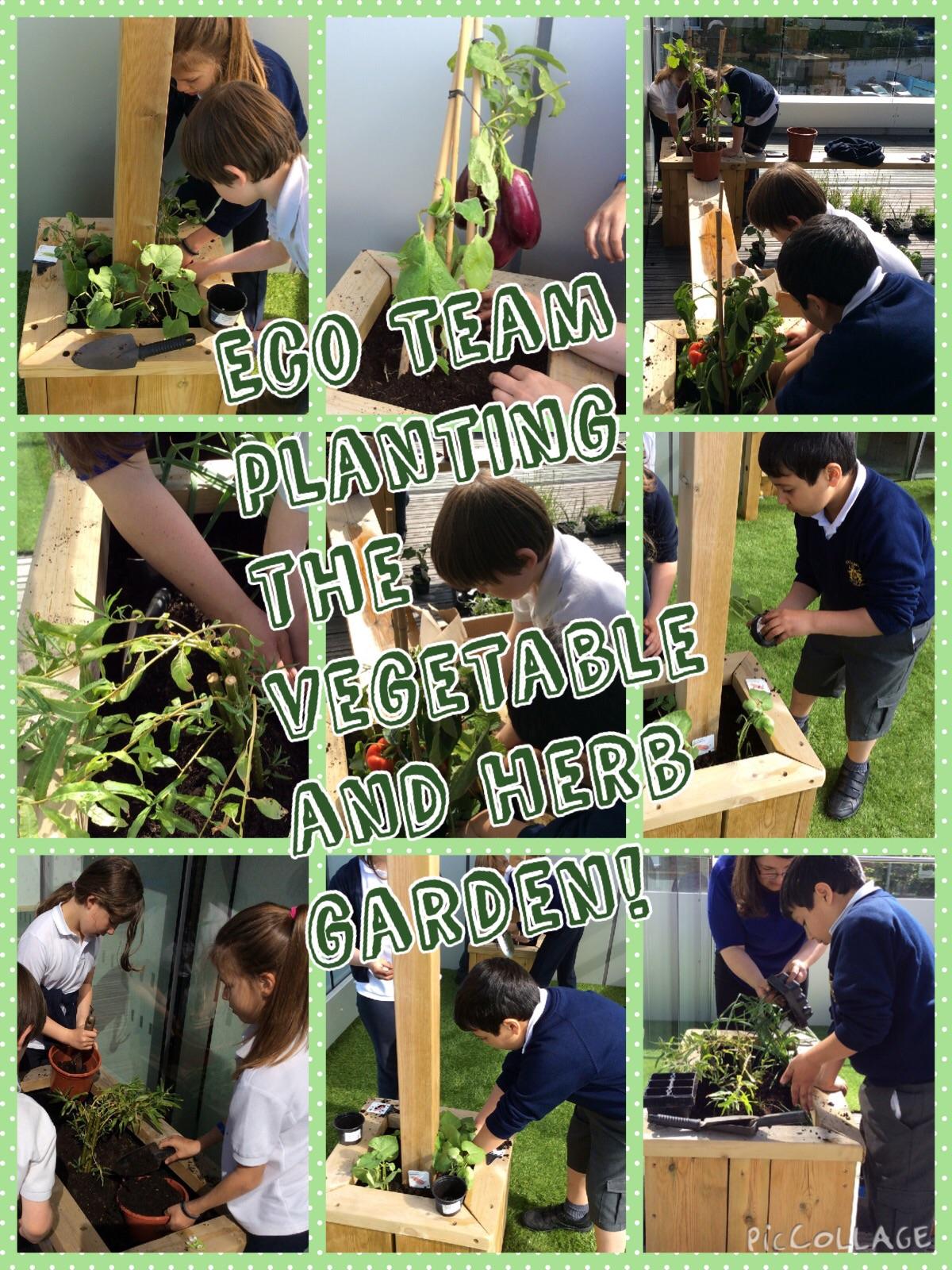 Eco Team planting