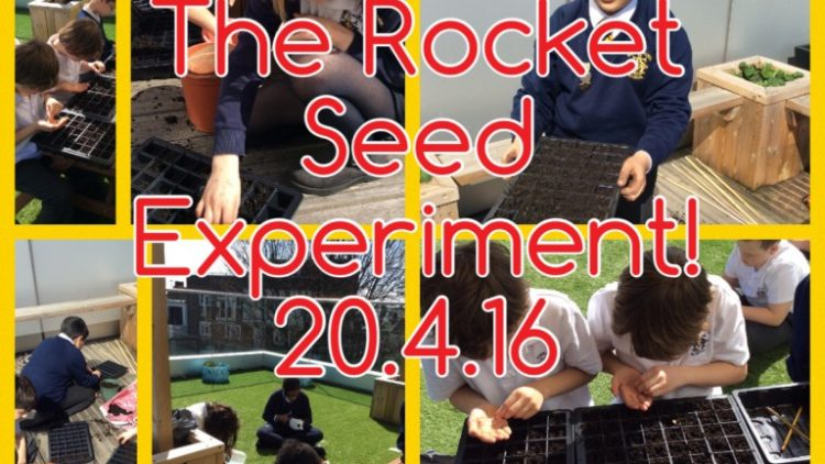 Rocket Seeds From Space!