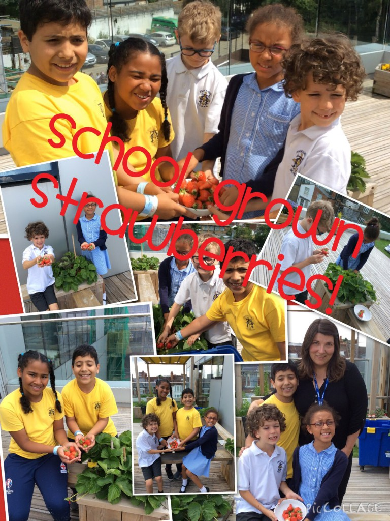 School Grown Strawberries!