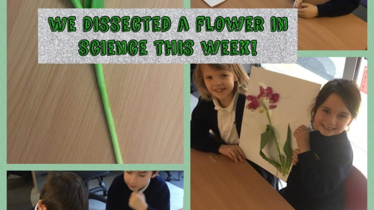 2G Dissecting a Flower in Science!
