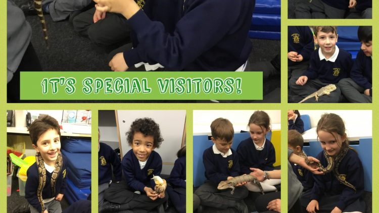 1T are visited by the Tropical Zoo.