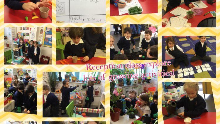 Reception class enjoy lots of growing activities!